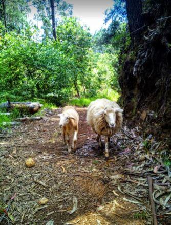Liza i Leo na spacerze, zbieramy nasionka traw