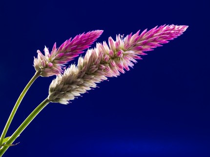flower-218483_640
