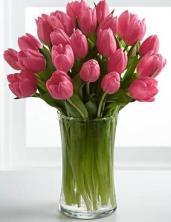 buchet-25-lalele-roz-pastel-roz