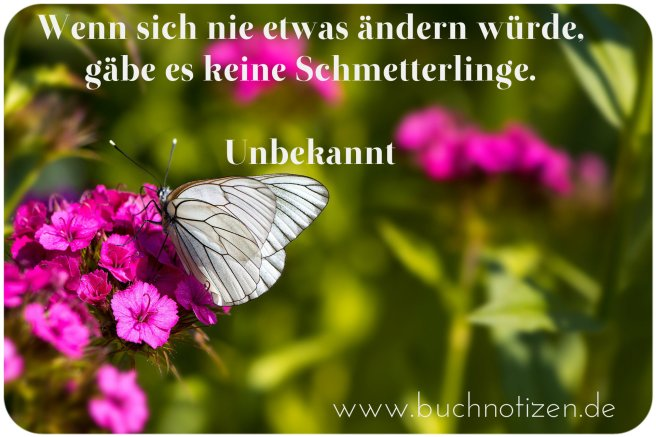 Schmetterling 29.07.2016