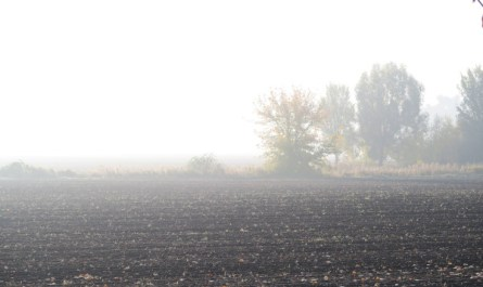 Morgennebel in Pankow