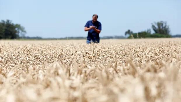 Optimismo de los productores por la marcha de la economía, según el índice del INTA