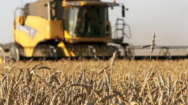 Hay problemas de calidad con el trigo de la cosecha pasada