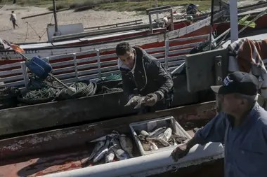 Uno por uno, Sebastián saca del interior de la barca los pescados que son acomodados en cajones hasta completar los 24 kilos