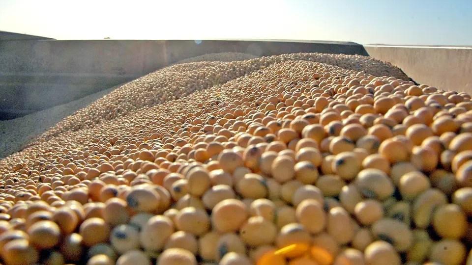 Semillas de soja foto: Archivo