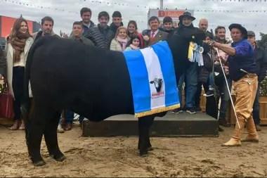 El Gran Campeón Hembra Brangus. La Sultana-Capil SA y Las Lajitas SA