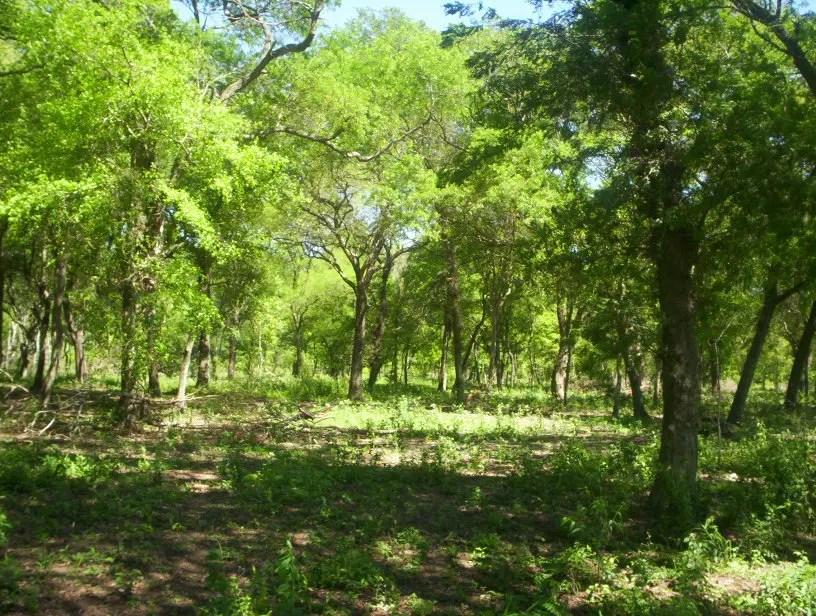 Posturas encontradas en Córdoba por el reemplazo de la ley vigente para bosques.