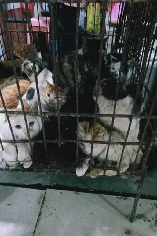 Gatos esperan a ser vendidos en el mercado de Guillin, en el sudoeste de China