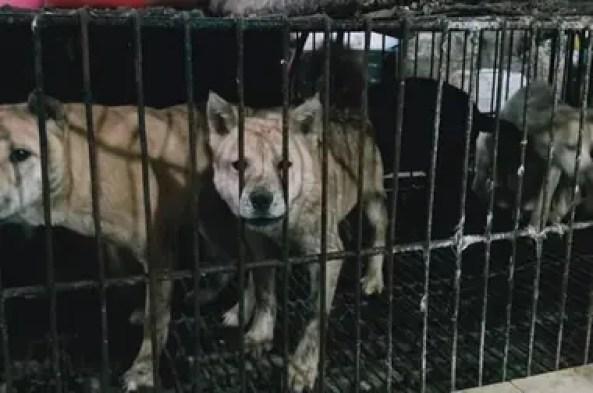 Los perros también se venden como comida en Guillin, como lo muestra esta foto tomada ayer sábado en ese mercado