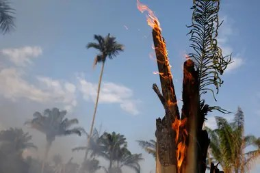 Los incendios forestales son comunes en la estación seca, pero también son provocados deliberadamente por agricultores que queman ilegalmente tierras para dedicarlas a la cría de ganado.