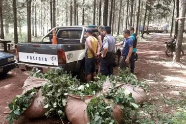 "Dos transportistas detenidos con ""raídos"" de hoja verde"