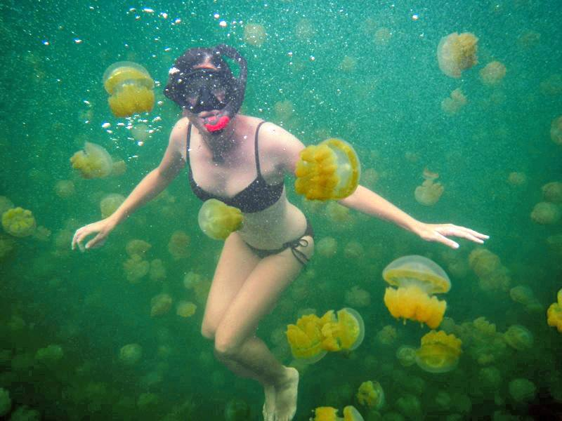 Things to do before you die: Swim in Jellyfish Lake in Palau