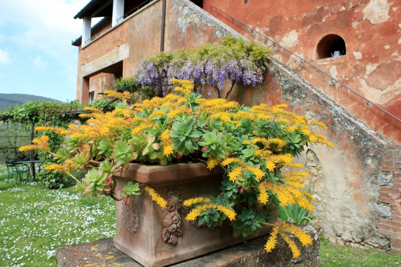 Flowers at a Tuscan Villa in Italy