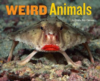 book cover Weird Animals
