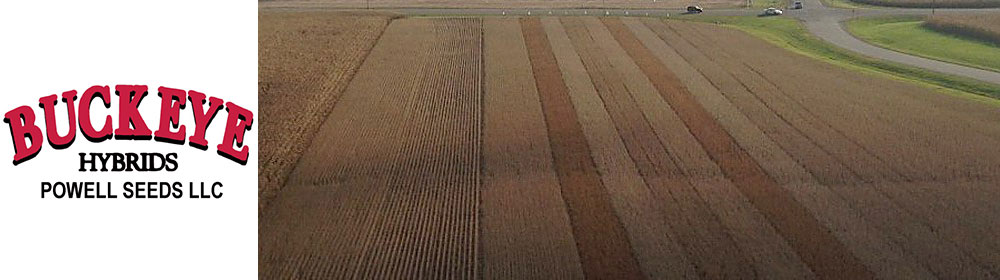 Soybean Field Plot Strips