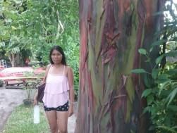 Strange tree going to Secret Cove