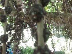 Strange tree with seeds