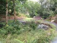 Wild Wood Quicklime Pit - www.buckinghamvintage.co.uk