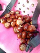 Autumn Bike Seat full of Conkers www.BuckinghamVintage.co.uk