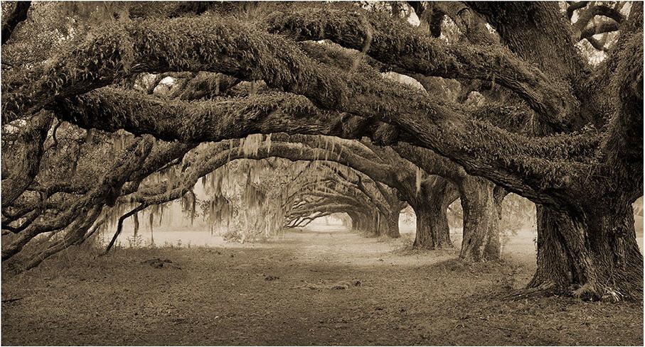 Plantation Road; Copyright Benjamin Ham