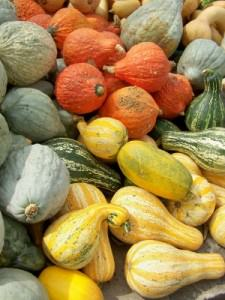 Squashes and gourds from Trauger's; photo by L. Goldman