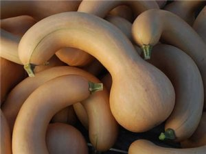 Crookneck Pumpkin; photo courtesy rareseeds.com