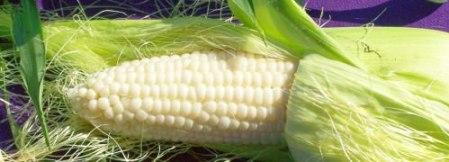 Corn. Photo credit: Lynne Goldman