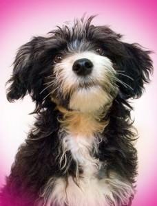 Puppy_scruffy