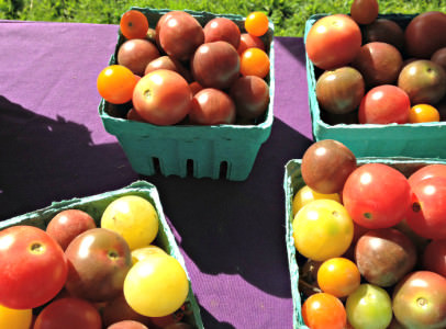 cherry tomatoes_Milk House Farm_June 21 2014