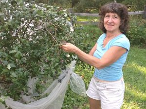 Chef Linda Jacobs and her blueberry bush