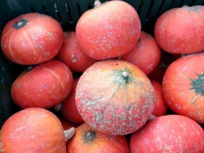 winter squash_pumpkins_BGF_Oct 18 2014