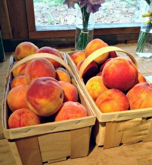 Peaches, Manoff Market Gardens