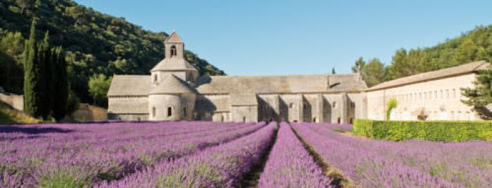 Abbaye de Senanque lavender