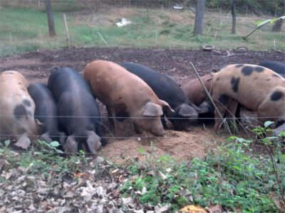 Pig Roast, Bobolink Farm website