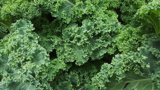 Kale; photo credit Lynne Goldman