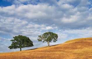 Oak hillside Landscape after the spring rain
