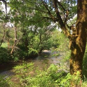 Nahalem river