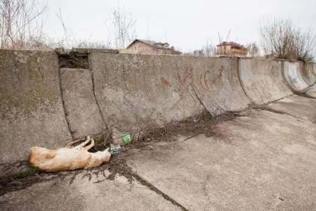 De aici vine apa de baut in tot Bucurestiul! E plin de ANIMALE MOARTE si GUNOAIE!