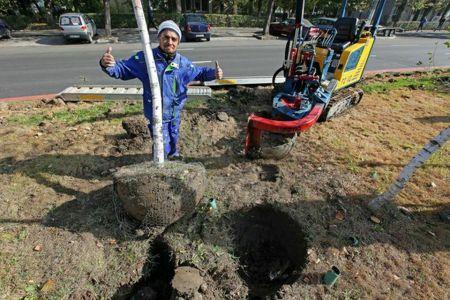 Investitii cu cap: Primaria Sectorului 3 scoate copacii plantati asta primavara si-i inlocuieste cu altii!