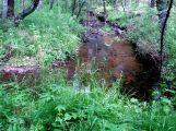 Река Заганка