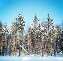 Лес возле Котокеля