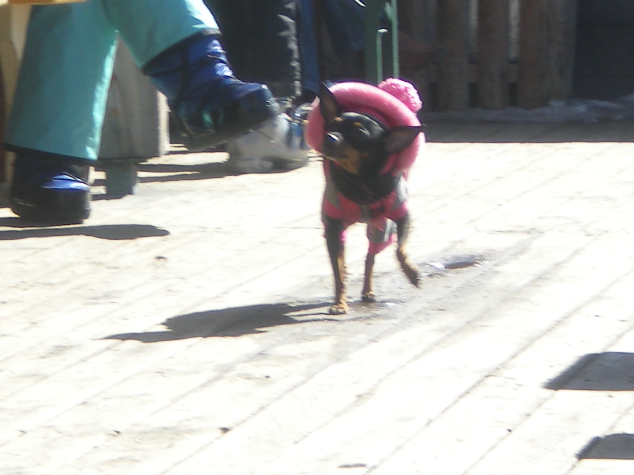 This dog had a seriously awesome hat