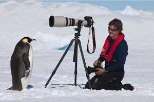 ペンギン警戒