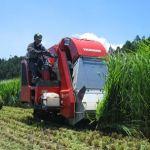 飼料稲は本当に儲かる?飼料用米の助成金・交付金の補助金制度とは