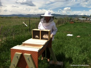 Sarah and her bees - with the snow capped peaks behind.