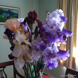 cut irises