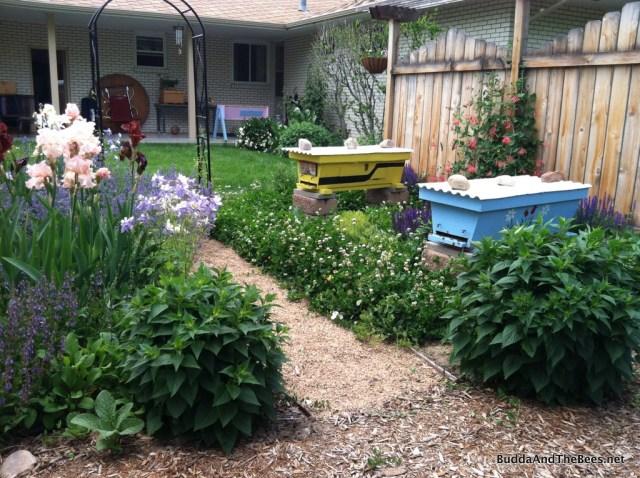 Bee yard in bloom