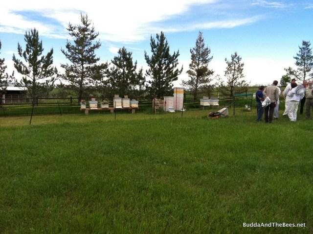 Countryside apiary