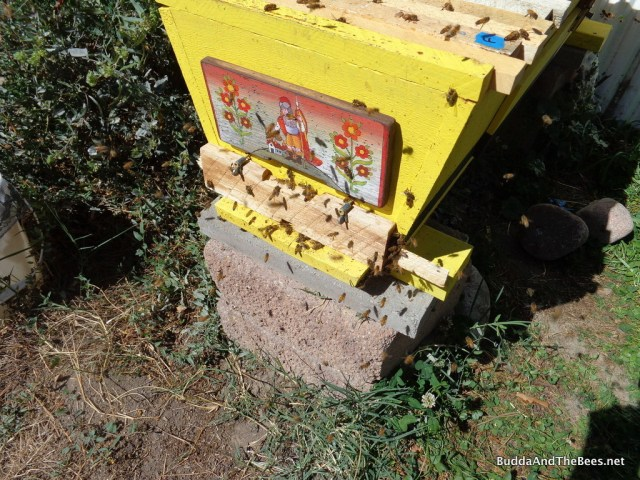 Robber bees trying to get in