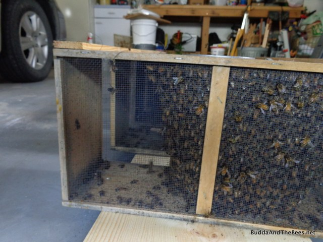 3-lb package of bees
